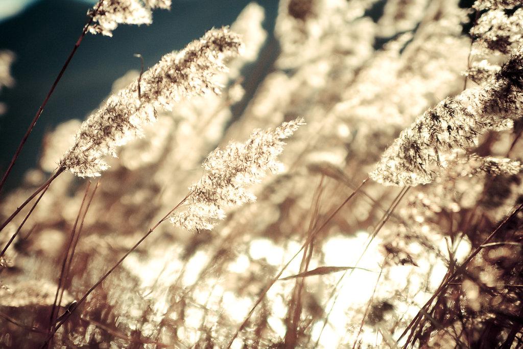 herbstkind-001.jpg